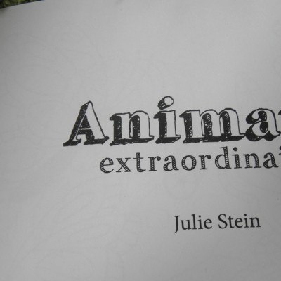 julie_stein_animaux_2