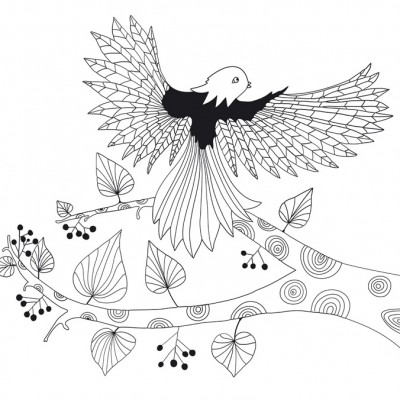 julie_stein_oiseau